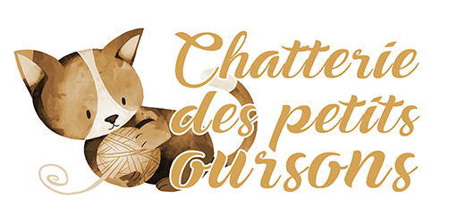 Chatterie des petits oursons